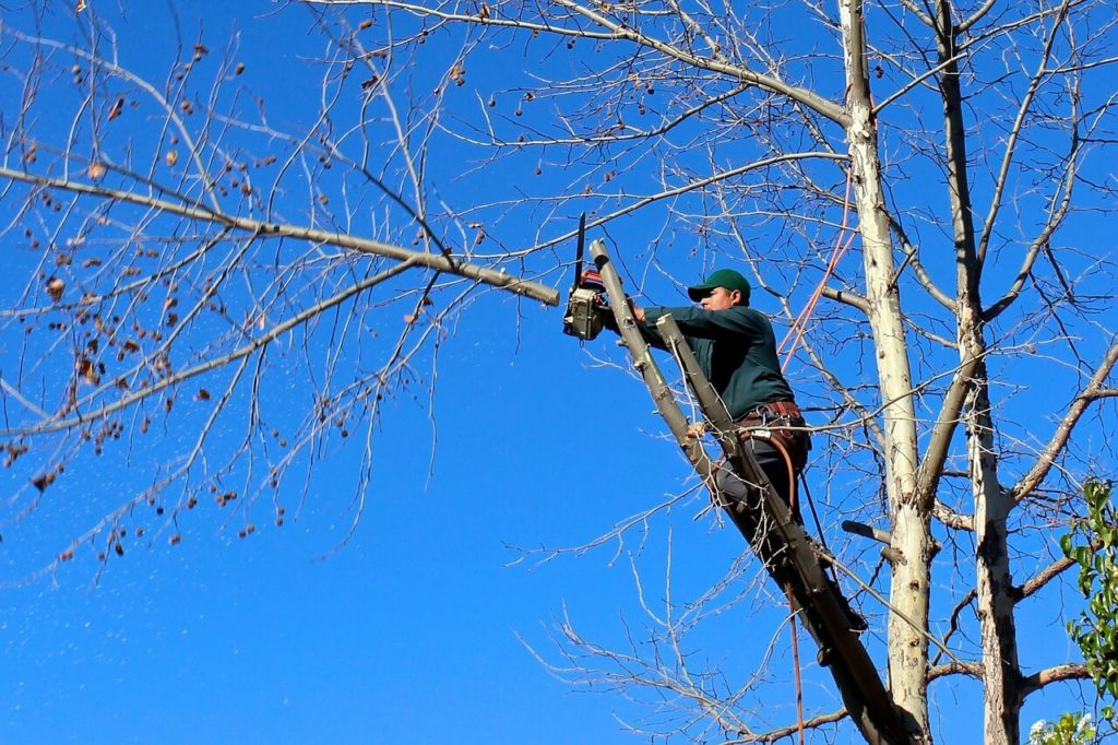 Contact Us-Durant FL Tree Trimming and Stump Grinding Services-We Offer Tree Trimming Services, Tree Removal, Tree Pruning, Tree Cutting, Residential and Commercial Tree Trimming Services, Storm Damage, Emergency Tree Removal, Land Clearing, Tree Companies, Tree Care Service, Stump Grinding, and we're the Best Tree Trimming Company Near You Guaranteed!
