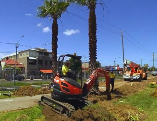 Palm Tree Removal-Durant FL Tree Trimming and Stump Grinding Services-We Offer Tree Trimming Services, Tree Removal, Tree Pruning, Tree Cutting, Residential and Commercial Tree Trimming Services, Storm Damage, Emergency Tree Removal, Land Clearing, Tree Companies, Tree Care Service, Stump Grinding, and we're the Best Tree Trimming Company Near You Guaranteed!