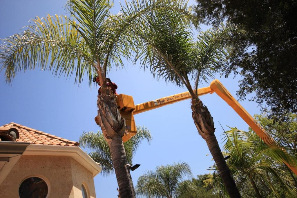 Palm Tree Trimming-Durant FL Tree Trimming and Stump Grinding Services-We Offer Tree Trimming Services, Tree Removal, Tree Pruning, Tree Cutting, Residential and Commercial Tree Trimming Services, Storm Damage, Emergency Tree Removal, Land Clearing, Tree Companies, Tree Care Service, Stump Grinding, and we're the Best Tree Trimming Company Near You Guaranteed!