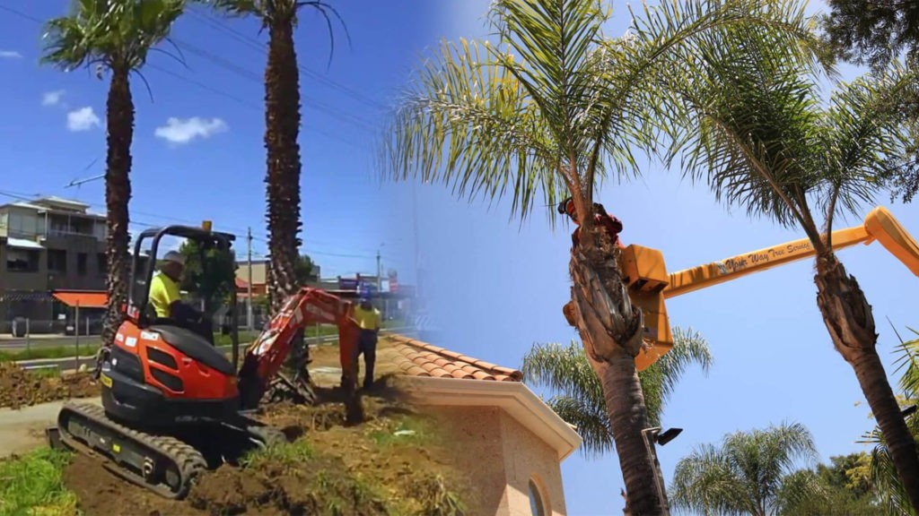 Palm tree trimming & palm tree removal-Durant FL Tree Trimming and Stump Grinding Services-We Offer Tree Trimming Services, Tree Removal, Tree Pruning, Tree Cutting, Residential and Commercial Tree Trimming Services, Storm Damage, Emergency Tree Removal, Land Clearing, Tree Companies, Tree Care Service, Stump Grinding, and we're the Best Tree Trimming Company Near You Guaranteed!