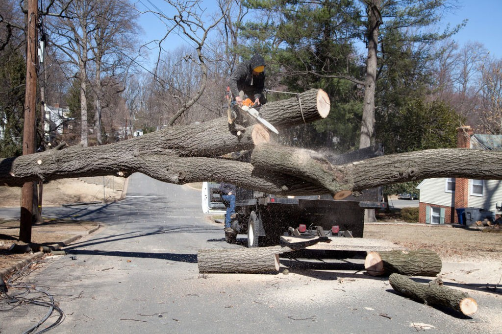 Residential Tree Services-Durant FL Tree Trimming and Stump Grinding Services-We Offer Tree Trimming Services, Tree Removal, Tree Pruning, Tree Cutting, Residential and Commercial Tree Trimming Services, Storm Damage, Emergency Tree Removal, Land Clearing, Tree Companies, Tree Care Service, Stump Grinding, and we're the Best Tree Trimming Company Near You Guaranteed!