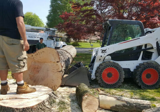 Services-Durant FL Tree Trimming and Stump Grinding Services-We Offer Tree Trimming Services, Tree Removal, Tree Pruning, Tree Cutting, Residential and Commercial Tree Trimming Services, Storm Damage, Emergency Tree Removal, Land Clearing, Tree Companies, Tree Care Service, Stump Grinding, and we're the Best Tree Trimming Company Near You Guaranteed!