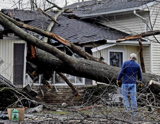 Storm Damage-Durant FL Tree Trimming and Stump Grinding Services-We Offer Tree Trimming Services, Tree Removal, Tree Pruning, Tree Cutting, Residential and Commercial Tree Trimming Services, Storm Damage, Emergency Tree Removal, Land Clearing, Tree Companies, Tree Care Service, Stump Grinding, and we're the Best Tree Trimming Company Near You Guaranteed!