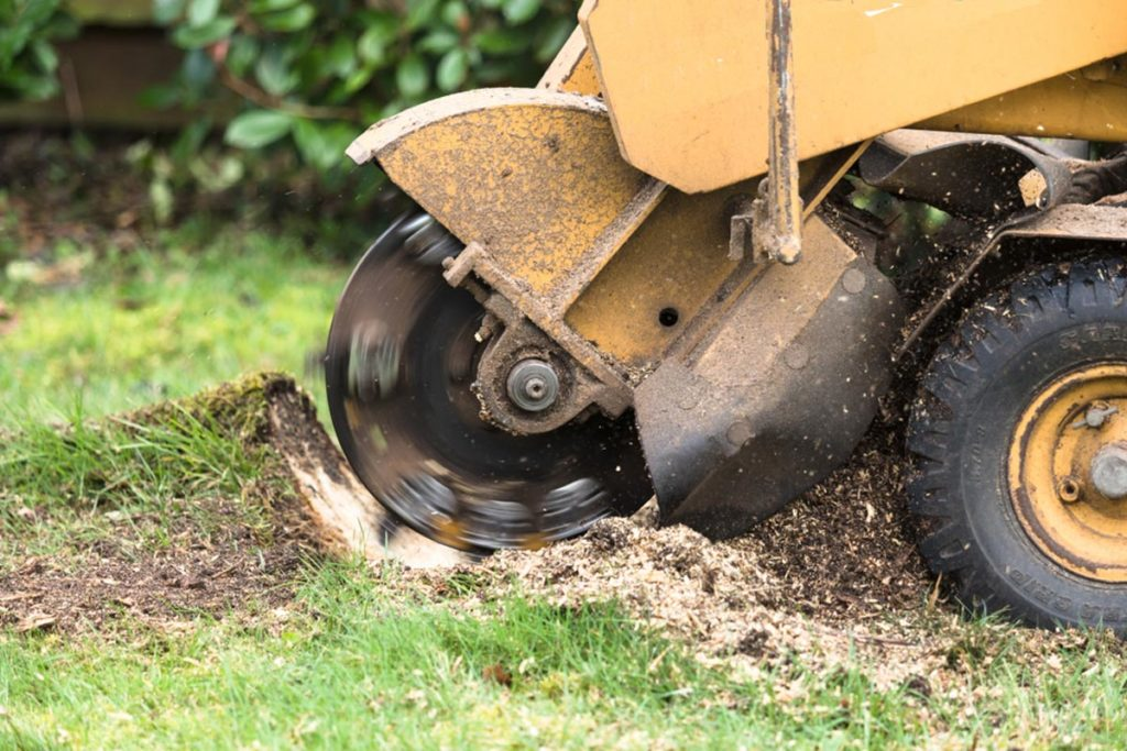 Stump Grinding-Durant FL Tree Trimming and Stump Grinding Services-We Offer Tree Trimming Services, Tree Removal, Tree Pruning, Tree Cutting, Residential and Commercial Tree Trimming Services, Storm Damage, Emergency Tree Removal, Land Clearing, Tree Companies, Tree Care Service, Stump Grinding, and we're the Best Tree Trimming Company Near You Guaranteed!