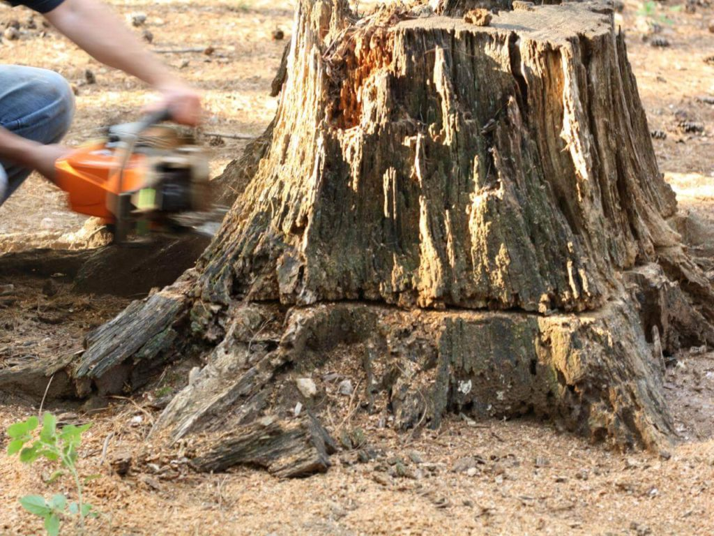 Stump Removal-Durant FL Tree Trimming and Stump Grinding Services-We Offer Tree Trimming Services, Tree Removal, Tree Pruning, Tree Cutting, Residential and Commercial Tree Trimming Services, Storm Damage, Emergency Tree Removal, Land Clearing, Tree Companies, Tree Care Service, Stump Grinding, and we're the Best Tree Trimming Company Near You Guaranteed!
