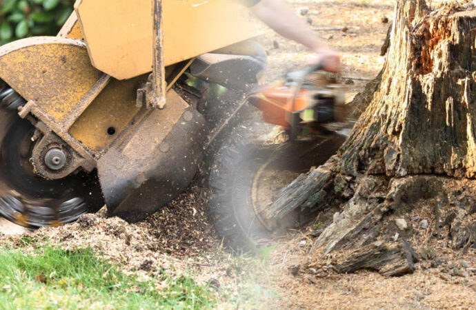Stump grinding & removal-Durant FL Tree Trimming and Stump Grinding Services-We Offer Tree Trimming Services, Tree Removal, Tree Pruning, Tree Cutting, Residential and Commercial Tree Trimming Services, Storm Damage, Emergency Tree Removal, Land Clearing, Tree Companies, Tree Care Service, Stump Grinding, and we're the Best Tree Trimming Company Near You Guaranteed!