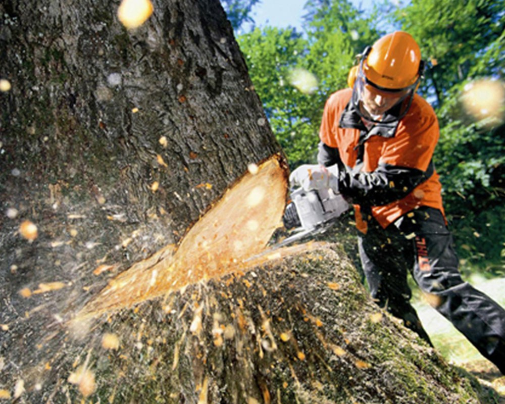 Tree Cutting-Durant FL Tree Trimming and Stump Grinding Services-We Offer Tree Trimming Services, Tree Removal, Tree Pruning, Tree Cutting, Residential and Commercial Tree Trimming Services, Storm Damage, Emergency Tree Removal, Land Clearing, Tree Companies, Tree Care Service, Stump Grinding, and we're the Best Tree Trimming Company Near You Guaranteed!