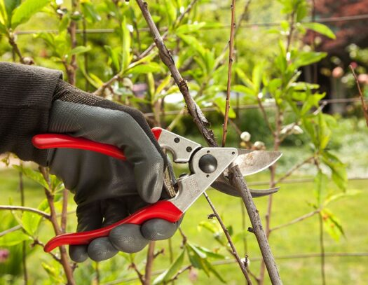 Tree Pruning-Durant FL Tree Trimming and Stump Grinding Services-We Offer Tree Trimming Services, Tree Removal, Tree Pruning, Tree Cutting, Residential and Commercial Tree Trimming Services, Storm Damage, Emergency Tree Removal, Land Clearing, Tree Companies, Tree Care Service, Stump Grinding, and we're the Best Tree Trimming Company Near You Guaranteed!