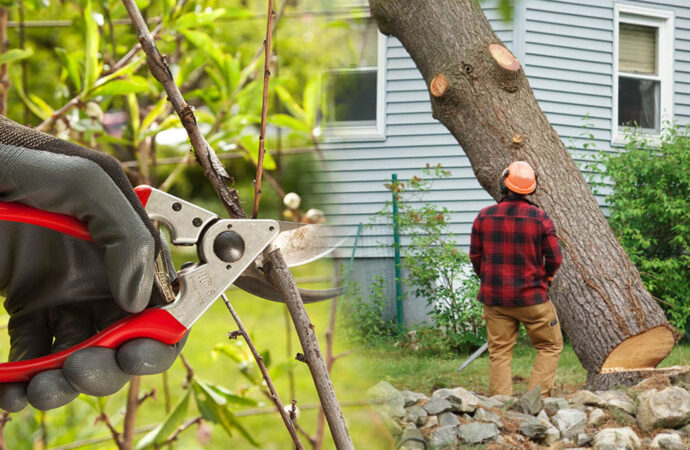 Tree pruning & tree removal-Durant FL Tree Trimming and Stump Grinding Services-We Offer Tree Trimming Services, Tree Removal, Tree Pruning, Tree Cutting, Residential and Commercial Tree Trimming Services, Storm Damage, Emergency Tree Removal, Land Clearing, Tree Companies, Tree Care Service, Stump Grinding, and we're the Best Tree Trimming Company Near You Guaranteed!